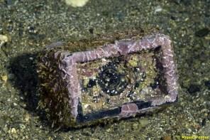 Deixalles, peça de plastic coberta d'algues