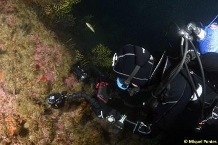 La inmersión en Ullastres permite muchas oportunidades para los fotógrafos, por Miquel Pontes