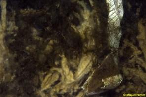 Compresa i restes de tovalloletes
