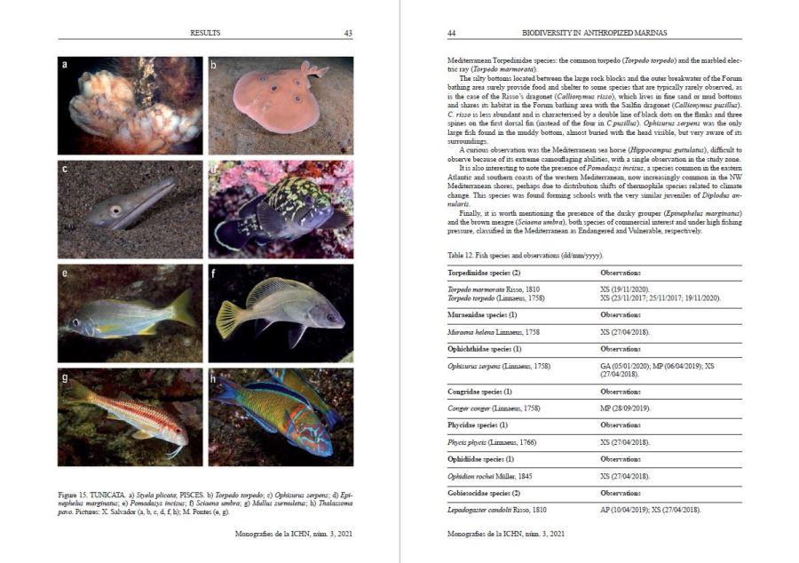 Monografies de la ICHN 3