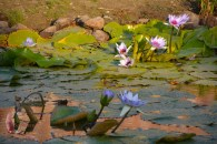 Closeup of the pond