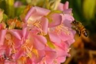 Bees love the new Botanic Garden