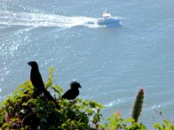 Birds and a boat