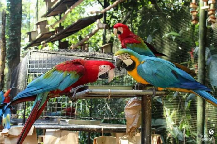 viveiros parque das aves