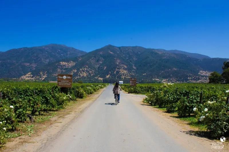 O que fazer em Santa Cruz, no Valle de Colchagua (Chile): Viña MontGras