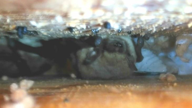 cajas para murciélagos