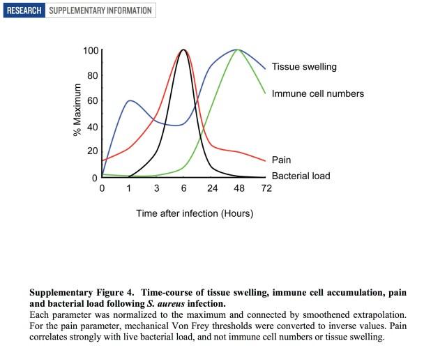 Bacteria and pain_Chiu, Woolf et al. 2013 NATURE