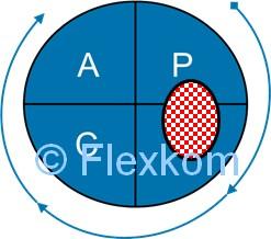 Hvad Er PDCA-cirklen/hjulet I Lean