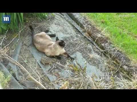هروب أرنب من بين أنياب قطة ليقع بين مخالب بومة (فيديو)