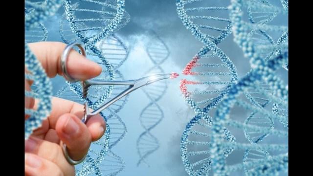 بالفيديو.. تطوير خلايا بشرية محصنة ضد الفيروسات