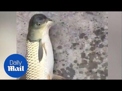 فيديو غريب.. هل هي سمكة أم طائر؟