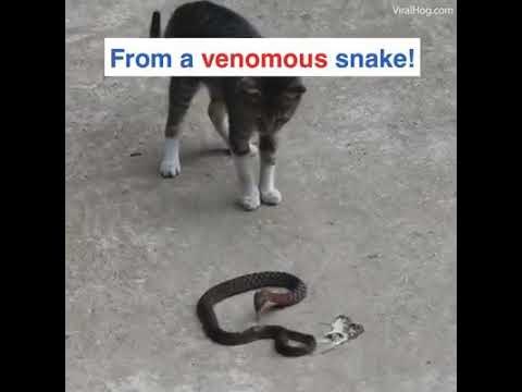 مواجهة مع ثعبان قاتل .. حيوان يدافع عن نفسه بشراسة