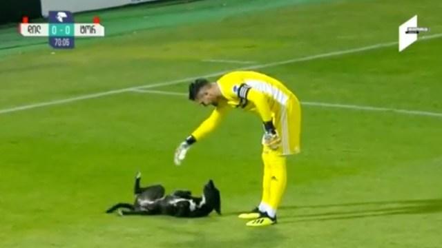 كلب يقتحم مباراة كرة قدم ويثير إعجاب اللاعبين والجمهور