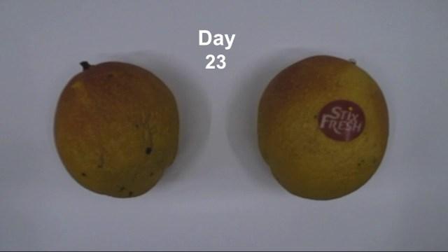 دون تبريد … طريقة لحفظ الفاكهة طازجة لمدة أسبوعين