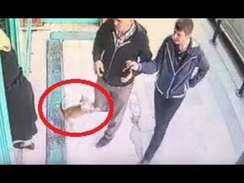 قطة غاضبة في إسطنبول تهاجم الرجال والكلاب وتستلطف النساء فقط