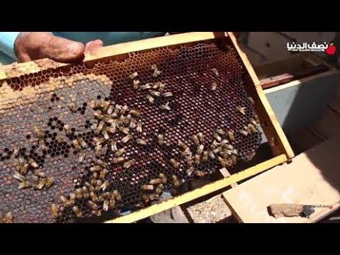 كيفية كشف عسل النحل المغشوش