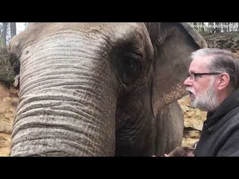 أنثى فيل تلتقي بحارسها بعد 35 عامًا: احتضنته