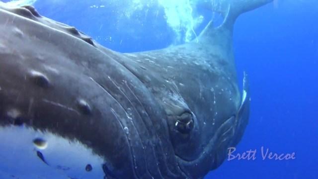 ظاهرة غامضة انتشرت في وسائل التواصل .. ما حقيقة صوت الحوت الأزرق؟