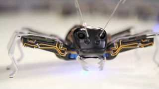 cutest robots for kids