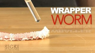 Wrapper Worm – Sick Science! #175