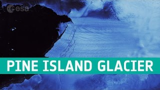 Pine Island Glacier spawns piglets