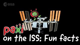 Paxi on the ISS: Fun facts about the ISS