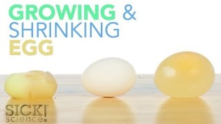 Growing and Shrinking Egg – Sick Science! #187