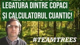 Legatura dintre copaci si calculatorul cuantic #TeamTrees