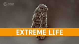 Meet the Experts: Extreme life