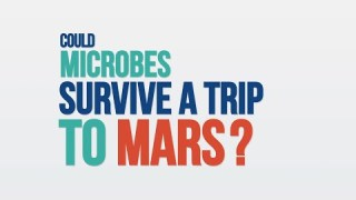 We Asked a NASA Scientist: Could Microbes Survive a Trip to Mars?