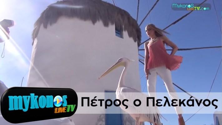 Μύκονος feat Πελεκάνος – Mykonos, Greece feat the Pelican