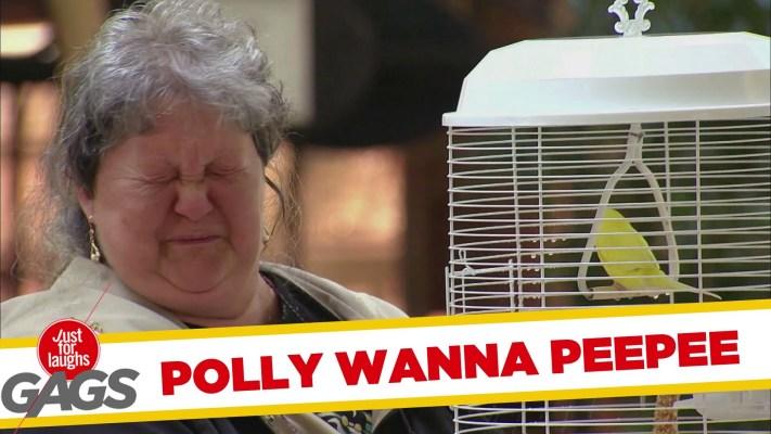 Polly Wanna Peepee