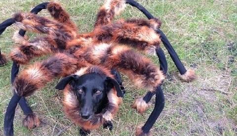 SA Wardega: Mutant Giant Spider Dog