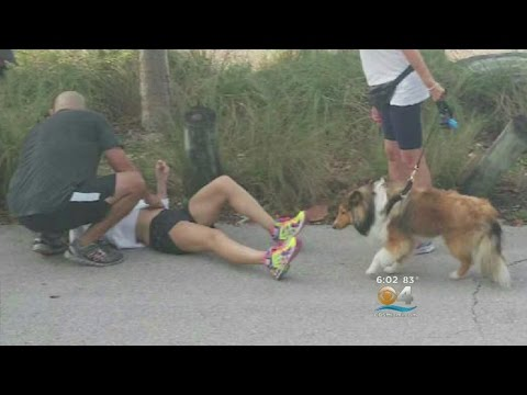 Runners Hit By Flying Tire On Rickenbacker Causeway
