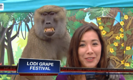 Monkey Feels Up Reporter