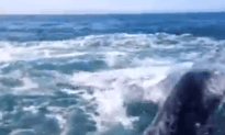 Too Funny: Whale Smacks Tourist on the Head