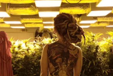 Naked Twerking in a Grow Room