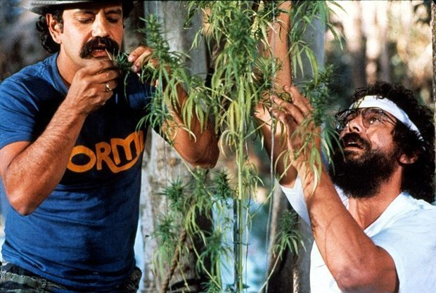 Cheech & Chong Nice Dreams