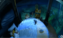Underwater Bedroom Aquarium Surrounded By Sharks