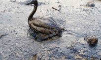 The Six Worst Realities of the Gulf of Mexico Oil Spill