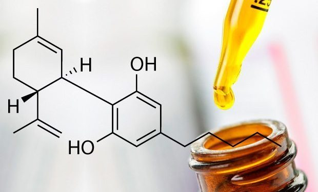 Where To Buy The Best CBD Oil?