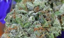 Governors Ask The US To Reclassify Marijuana