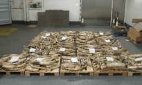 Huge Shipment of Illegal African Ivory Seized in Hong Kong