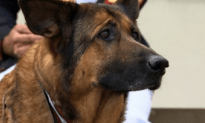 Military Pooch Receives Medal For Courage