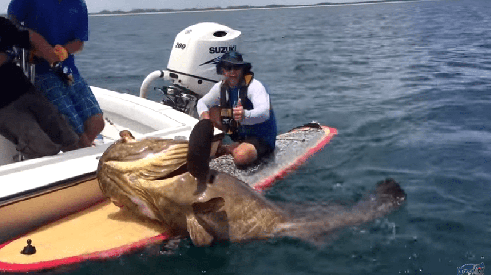 Seven Foot Grouper Caught On Paddleboard