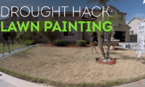 Yard Hack For A Water Drought