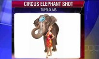 Ringling Bros. and Barnum & Bailey's Asian Elephant shot in a Drive by Shooting