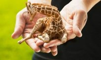 Someone Get The Chronic Mansion This Mini Giraffe!