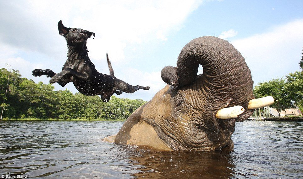 This Puppy and Elephant Playing Fetch Will Melt Your Heart