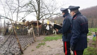 Photo of Pozzuoli – Controlli dei carabinieri ad allevamento e azienda agricola